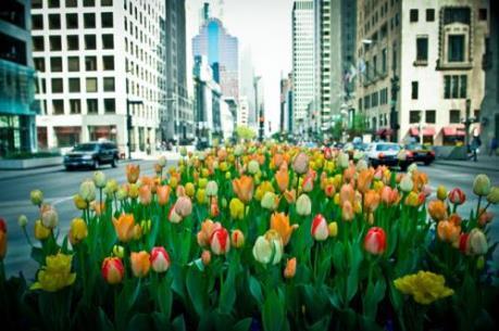 Mùa Xuân năm nay sẽ đến sớm với nước Mỹ