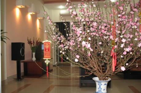 Hoa tết và thú chơi hoa đào tao nhã của người Hà Nội