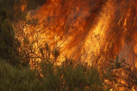 Cháy rừng thuộc Vườn quốc gia Hoàng Liên