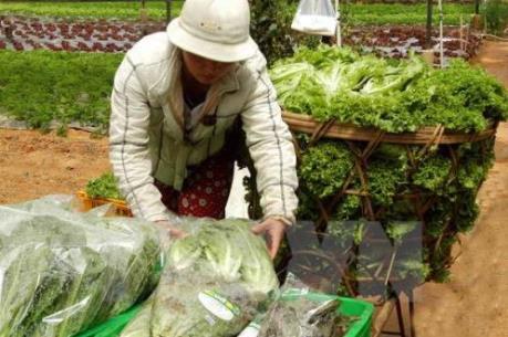 Hạn hán và ngập mặn đẩy giá rau tăng cao