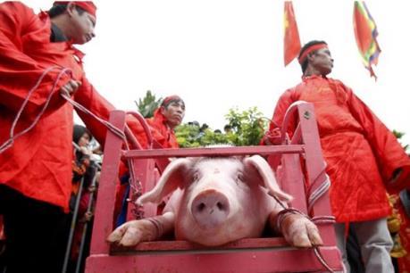 Bỏ nghi thức chém lợn tại Lễ hội làng Ném Thượng-Bắc Ninh