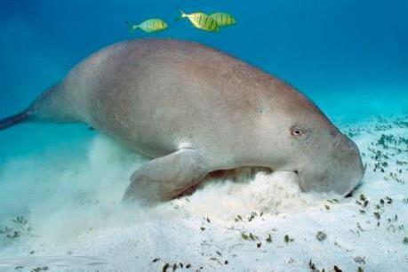 Đi tìm truyền thuyết giữa đại dương: Mỏi mắt tìm nàng tiên cá