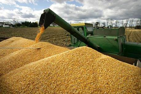 Lệnh cấm nhập khẩu đậu nành và ngô từ Mỹ vào Nga có hiệu lực