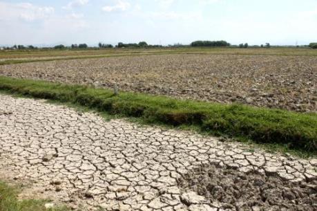 Gần 340.000 ha lúa có nguy cơ bị hạn, mặn