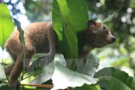 Tạm dừng cấp phép Công ước CITES với Lào