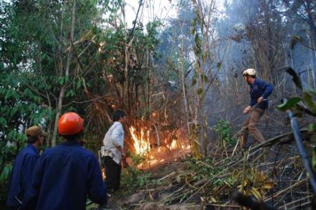 Cháy gần 30 ha rừng phòng hộ Dầu Tiếng trong những ngày nghỉ Tết
