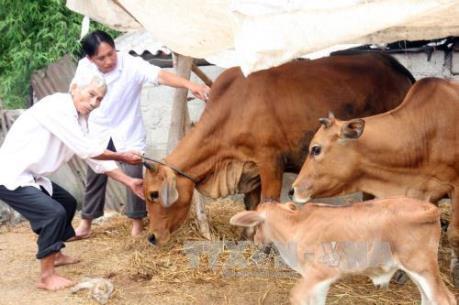 Đến năm 2020, giảm thiểu bệnh lở mồm long móng ở Việt Nam