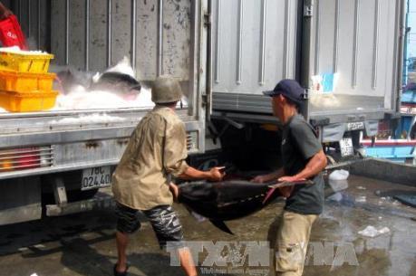 Sớm giải quyết bất cập trong thu phí ở Cảng cá Phú Lạc