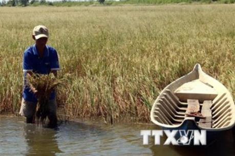Mặn có thể xâm nhập sâu vào sông Hậu trên 70km