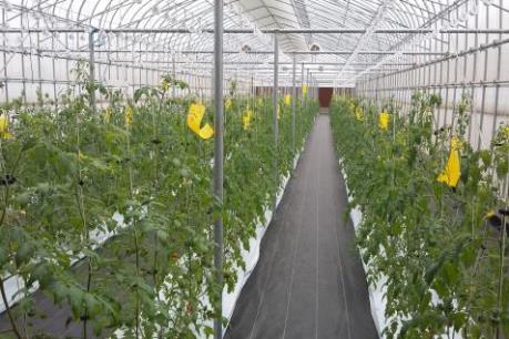 Doanh nghiệp Nhật Bản khảo sát đầu tư nông nghiệp tại Hà Nam
