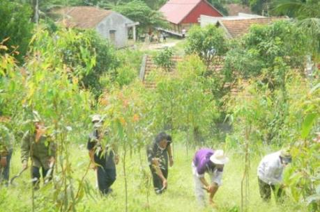 Thời tiết làm giảm tiến độ trồng mới rừng