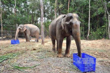 Vụ hàng nghìn con thú bị chết ở Vườn thú Vinpearl Safari: Ngành chức năng lên tiếng