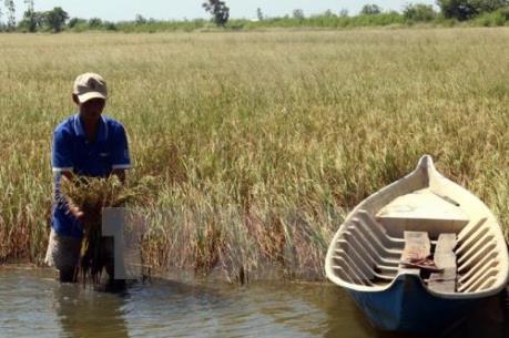 Từ nay đến 7/3, Đồng bằng sông Cửu Long cần tranh thủ lấy nước ngọt