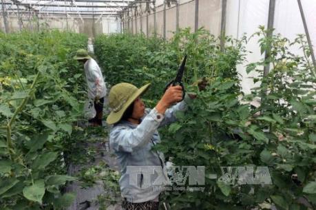 Đưa nông nghiệp công nghệ cao về xứ Thanh
