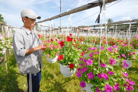 Hoa cây cảnh Việt vẫn khó cạnh tranh