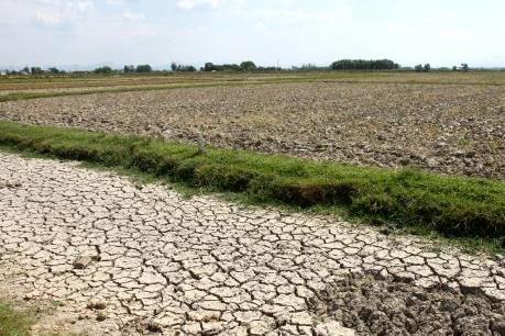 Hậu Giang khuyến cáo nông dân không xuống giống vụ Xuân Hè
