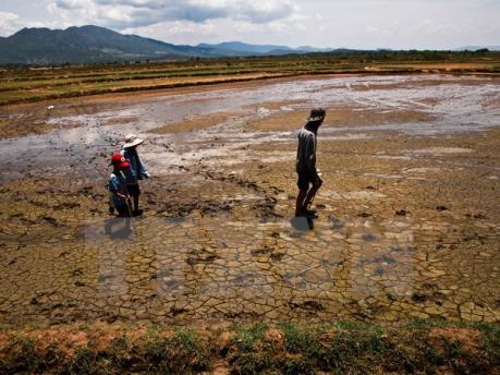 Hạn mặn ở Đồng bằng sông Cửu Long - Bài 1: Nghèo trên vựa lúa