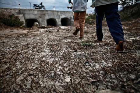 Ứng phó với biến đổi khí hậu: Khảo sát tình hình khô hạn tại Ninh Thuận