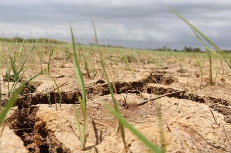 Hạn mặn ở Đồng bằng sông Cửu Long - Bài cuối: Liên kết, lồng ghép phát triển