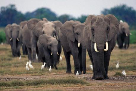 LHQ kêu gọi chấm dứt tình trạng săn bắt động vật hoang dã