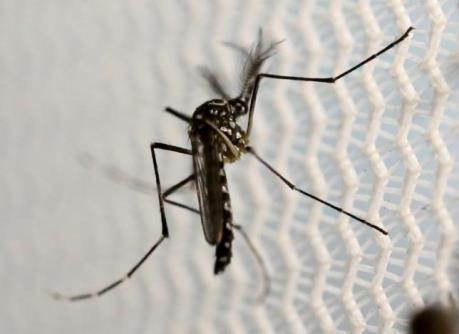 Cuba chẩn đoán trường hợp nhiễm Zika thứ 2