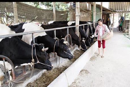 Cấp phép dự án nuôi bò nghìn tỷ đồng ở vùng biên sau 3 giờ đồng hồ