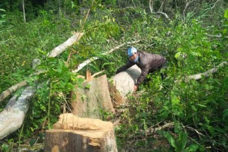 Gia Lai kỷ luật 15 cán bộ liên quan đến vụ phá rừng phòng hộ Ia Rsai