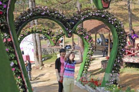 Nở rộ tour du lịch ngắm hoa Xuân