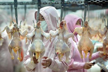 Tổ chức phi lợi nhuận kêu gọi Mỹ nhập khẩu thịt gà của Trung Quốc
