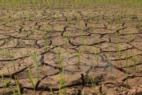 Liên hợp quốc kêu gọi viện trợ lương thực cho 34 quốc gia