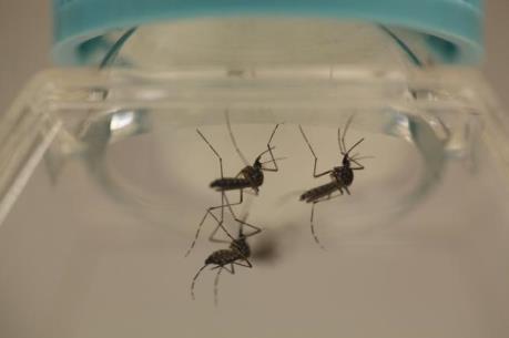 Gần 200 ca nhiễm Zika tại Mỹ