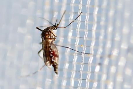 """Mỹ """"bật đèn xanh"""" dùng muỗi biến đổi gien chống Zika"""