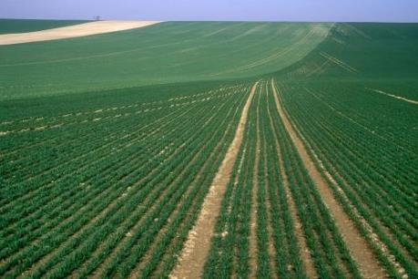 """Ngành nông nghiệp Pháp đang trong """"tình trạng khẩn cấp"""""""