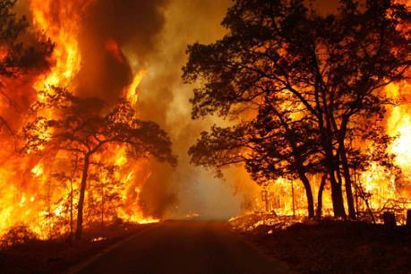 Liên tiếp xảy ra cháy rừng tại Lào Cai