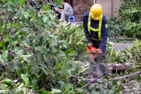 Tiếp tục cắt tỉa, dịch chuyển 62 cây xanh trên đường Xuân Thủy