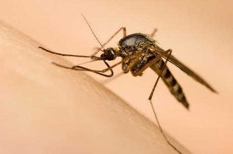 Hàn Quốc xác nhận trường hợp đầu tiên nhiễm virus Zika