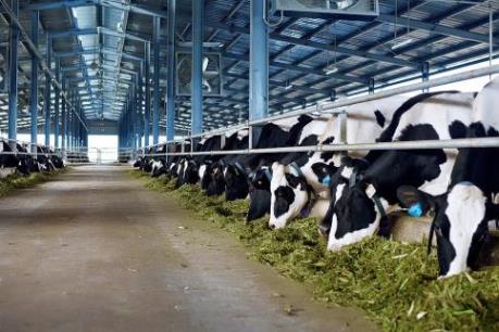 Pháp phát hiện trường hợp bò điên đầu tiên kể từ năm 2011