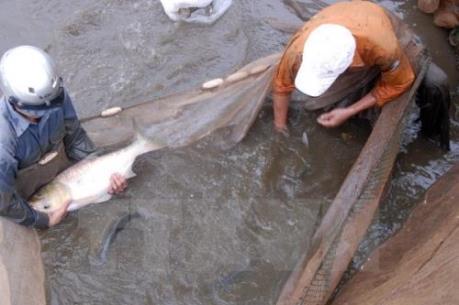 Thái Nguyên nhân rộng mô hình thâm canh thủy sản chất lượng cao