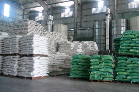 Giá lúa ở Cần Thơ tăng mạnh