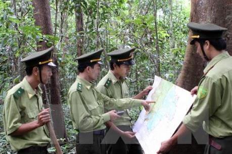 Thu gần 500 tỷ đồng từ dịch vụ môi trường rừng