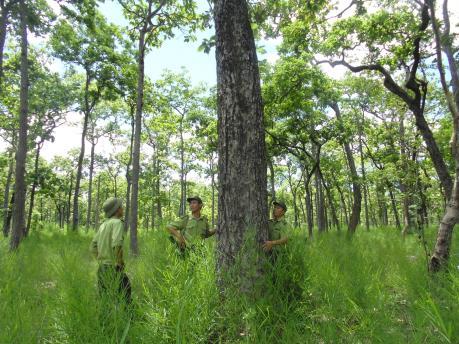 Chuyện giữ rừng ở Yokdon