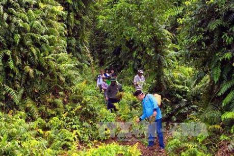 43.500 ha rừng tràm U Minh Hạ đang ở cấp độ báo động cháy cao nhất