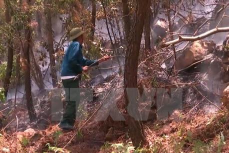 Cháy rừng ở Vườn quốc gia Chư Mom Ray