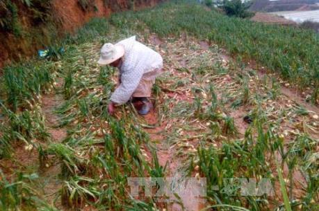 Mưa đá gây thiệt hại nghiêm trọng ở Tuyên Quang