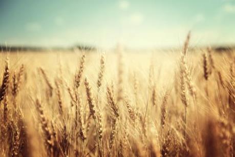 Nông sản thế giới đồng loạt tăng giá