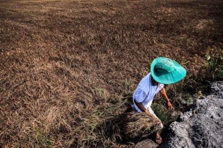 Bình Thuận đề xuất nhiều giải pháp phòng chống hạn