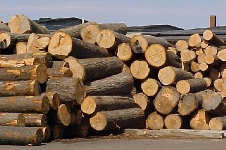 """Thị trường gỗ trong nước đang bị """"bỏ ngỏ"""""""