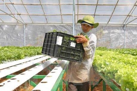 Nông nghiệp công nghệ cao hấp dẫn nhiều nhà đầu tư Việt