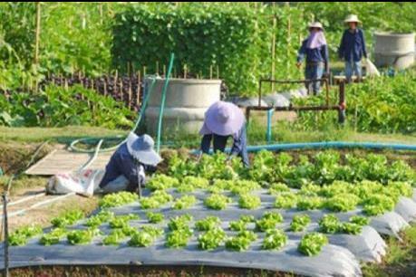 Hạn hán buộc Thái Lan phải đa dạng cây trồng vì hạn hán