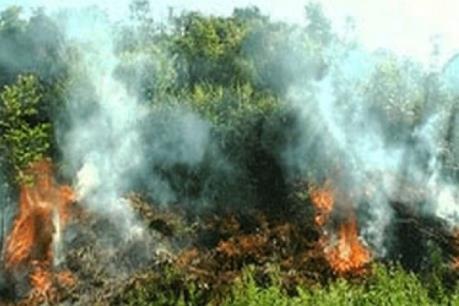 Cháy rừng trên diện rộng tại Yên Bái